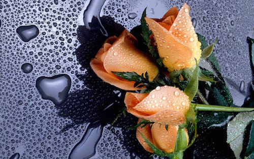 funeral costs rain orange flowers